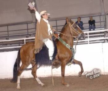 Colorado earns his third Canadian National Champion of Champions Pleasure Gelding title at the 2004 Canadian National Championships